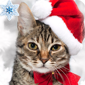 Найди Кота Новогодняя