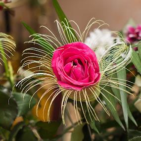 Flower by Michael Krivoshey - Flowers Flower Arangements ( wedding photography, weddings, wedding photographer, flower, bouquet,  )