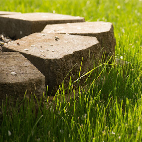 Grass and Stone by Kaushik Mitra - Nature Up Close Leaves & Grasses ( grass, green, dew, stone )