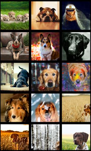 Beautiful Dog HD Wallpaper