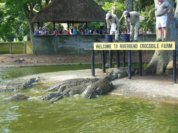 30f295ce1debb5 Nile crocodile