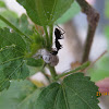 Aphid and Ant