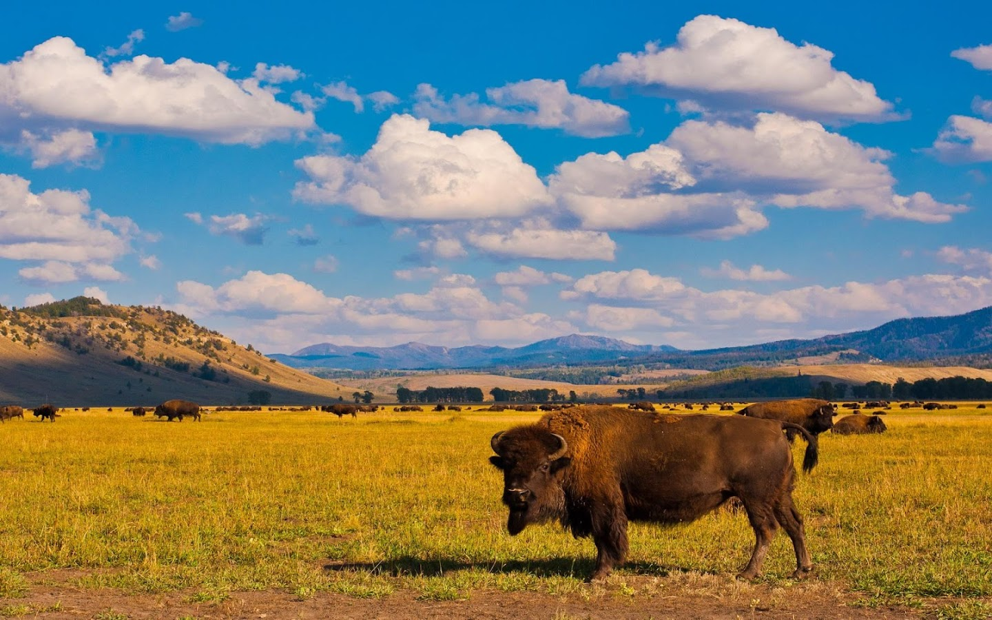 buffalo wallpaper android apps on google play