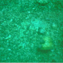 seashell snail/hermit crab home