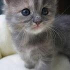Kitten Slideshow icon