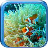 Marine Aquarium Live Wallpaper