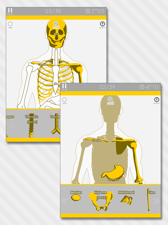 Enjoy Learning Anatomy puzzle - screenshot