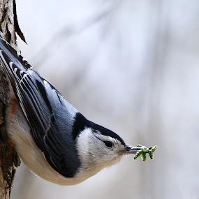 I'M really not here by Bill Redmond - Animals Birds ( bird, nature, covert?, travel, animal )