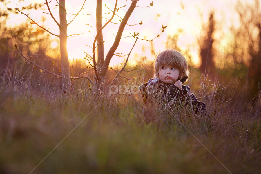 lil pud by Claire Conybeare - Chinchilla Photography - Babies & Children Toddlers ( grass, sunset, toddler )