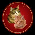 القط المتحرك icon