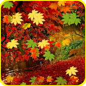 Autumn Leaves Falling LWP