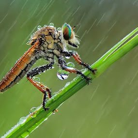 Rainy day by Fadel Satriawan - Animals Insects & Spiders