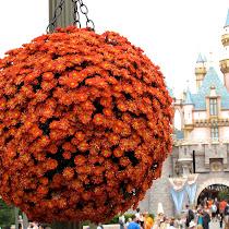 Discover Disney
