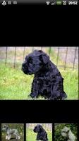 Screenshot of Hundar i Världen: Demo
