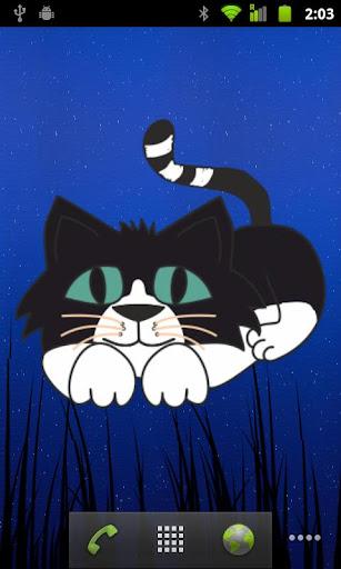 寶貝貓豪華
