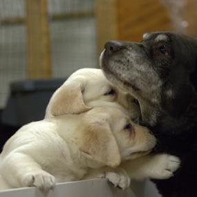 by Deanna Clark - Animals - Dogs Puppies (  )
