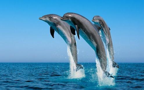 海豚壁紙 玩個人化App免費 玩APPs