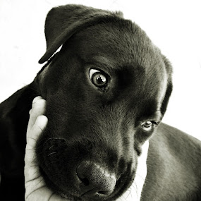 don´t be sad by Ruy Lopes - Animals - Dogs Puppies ( cão mão,  )