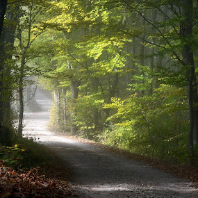 Magic light by Silva Predalič - Landscapes Forests ( trška gora, leading, autumn, slovenia, path, forest, light, nature, landscape, , Earth, Light, Landscapes, Views, relax, tranquil, relaxing, tranquility )