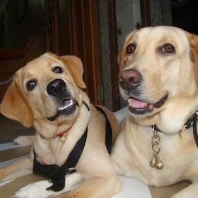by Palak Patel - Animals - Dogs Portraits ( #GARYFONGPETS, #SHOWUSYOURPETS )