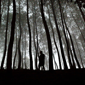 Silence by Dhani Prasetya Yudhistira - Instagram & Mobile Other ( fog, trees, forest, morning )