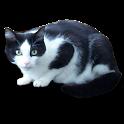 vCat icon