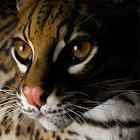 Tile Swap Game Wild Animals icon