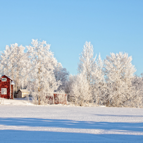 house in frost by Elisabeth Johansson - Landscapes Weather ( sky, tree, snow, sverige, frost, morning )