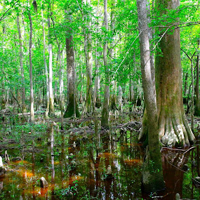 Congaree NP by Matt Padgett - Landscapes Waterscapes