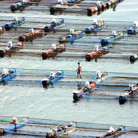 Fish Keramba at Toba Lake by Diadjeng Laraswati H - People Professional People (  )