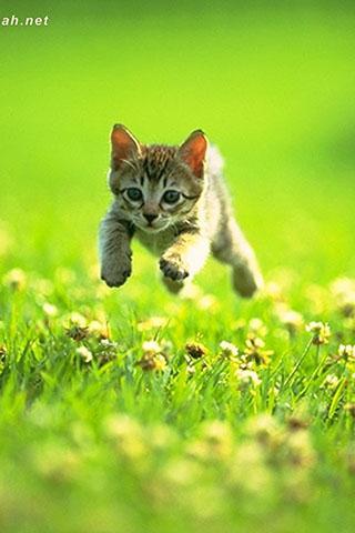 可愛小貓拼圖