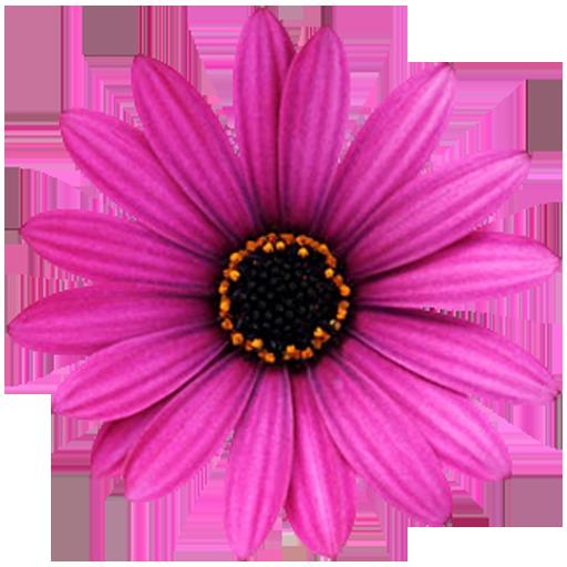 Flowers LWP Pro LOGO-APP點子