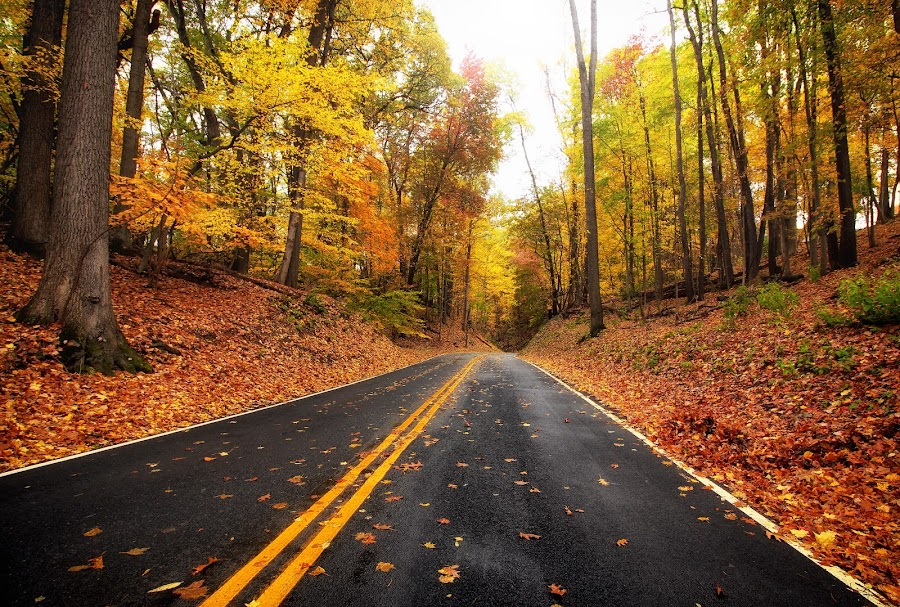 The road to fall by Gary Ledgerwood - Landscapes Forests