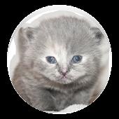 Whack A Kitten