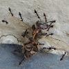 Crazy Ant; Bee