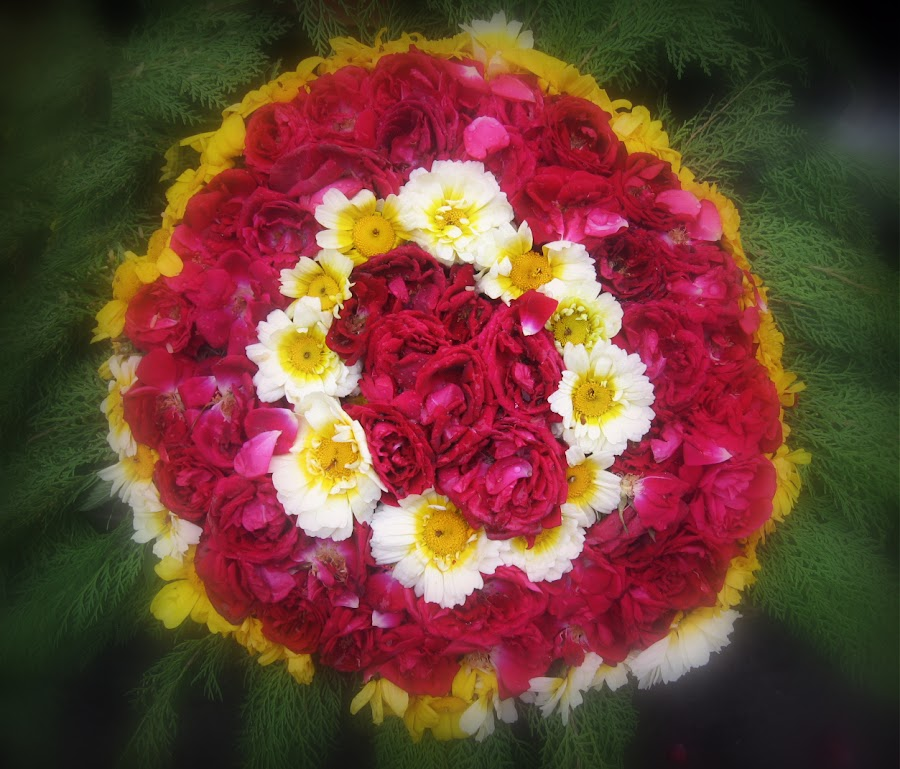 Circles by Kashif Ghauri - Flowers Flower Arangements ( kashif ghauri, rose, pakistan, beautiful flower arrangement, flowers, Flowers, Flower Arrangements,  )