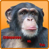 Chimpanzee vs. You