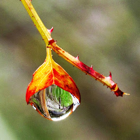 Drop on me after  the rain by Vladimir Krizan - Nature Up Close Leaves & Grasses