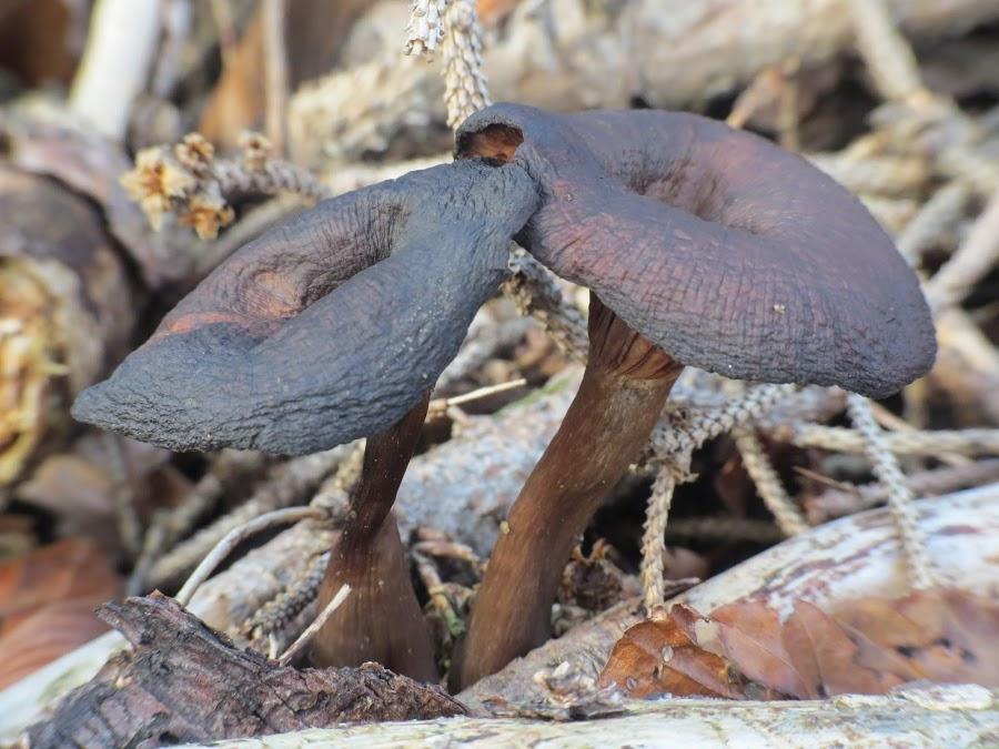 by Simona Maček - Nature Up Close Mushrooms & Fungi