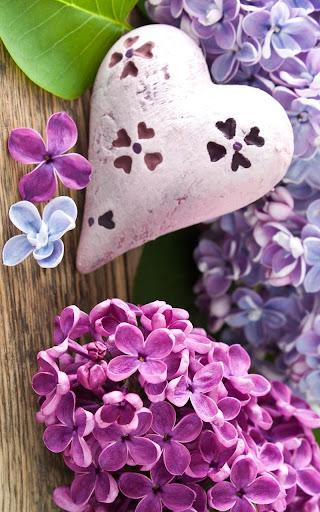 紫色丁香動態壁紙