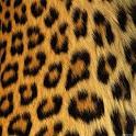 GO SMS Cheetah Theme icon