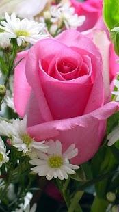 Květina Živá Tapeta - náhled