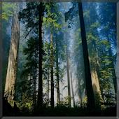 Yagmur Ormanlarina Yolculuk