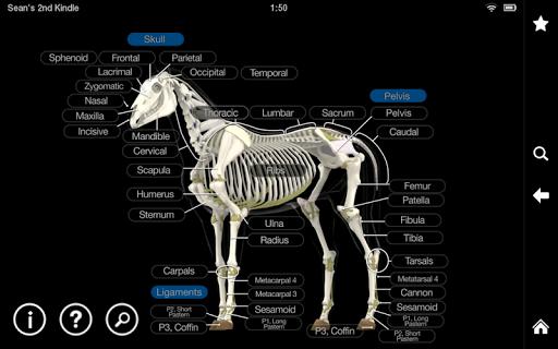 【免費醫療App】Horse Anatomy: Equine 3D-APP點子