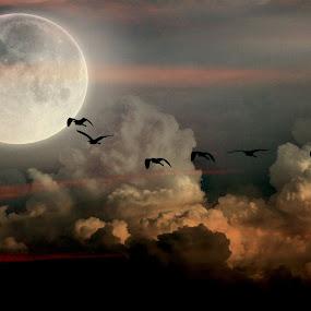 Egret flying to roost by Priscilla Renda McDaniel - Digital Art Animals ( clouds, flying, moon, egrets, manipulation,  )
