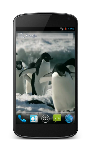 Penguins Free Video Wallpaper