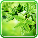 Leaves Live Wallpaper icon