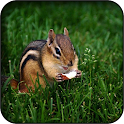Chipmunk wallpapers icon