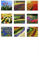 Screenshot of Free Flowers Collection