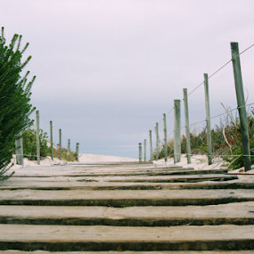 Walkway by Leanne Oosthuizen - Landscapes Beaches ( planks, sand, wooden, dune, plants, trees, walkway, beach )